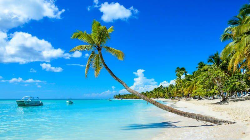 Praia com coqueiro
