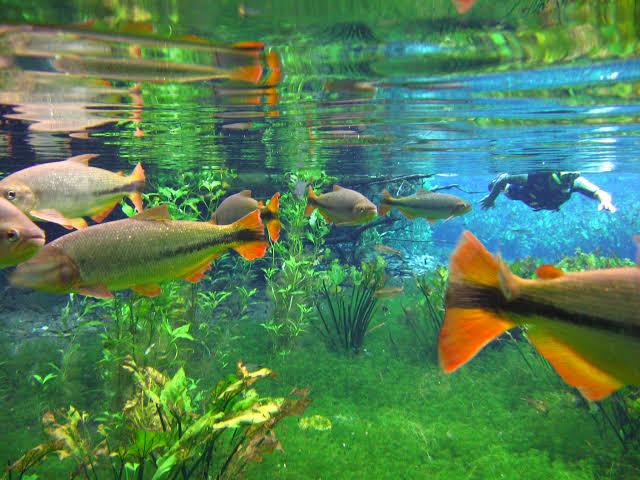 peixes na agua cristalina