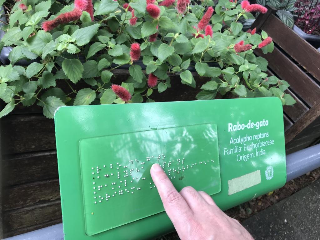 Planta com o descritivo em braille